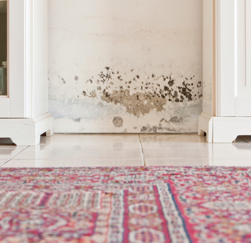 Mold on a hallway in a Longview home