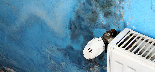 Expert Mold Removal. Our Experienced</br>Technicians Can Eliminate All Types of Mold